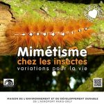 Exposition « Insectes »
