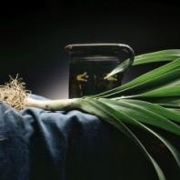 Exposition «Une Nature de Saveurs»